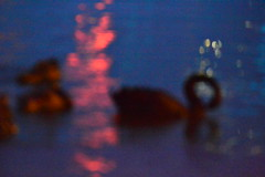 black swans (emmoff) Tags: night swan lowlight blackswan lakeburleygriffin