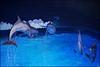 Dolfinarium & Frans Bauer _ 59 (@2008) Tags: holland netherlands zoo dolphin dolfinarium harderwijk dolfijn a900 zeiss135mmf18 sal135f18z sal135f18za