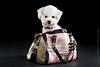 Marketing-photo-shoot-3 (Rob Orthen) Tags: dogs koiria roborthenphotography mainoskuvaus koirakuvaus