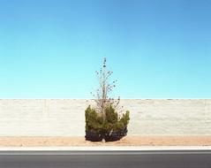 (andrew sea james) Tags: blue sky tree film landscape pentax lasvegas kodak nevada scanned epson medium format 6x7 expired smc portra 220 105mm f24 400vc v500