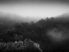 Motosu morning fog (StephenCairns) Tags: trees blackandwhite bw mist japan fog pine forest bamboo hills explore   fp frontpage   gifu  moutains hydrolines   motosu  ruralscenes    canon50d stephencairns 70200mmf4isusm 50dcanon