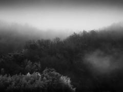 Motosu morning fog (StephenCairns) Tags: trees blackandwhite bw mist japan fog pine forest bamboo hills explore 日本 木 fp frontpage 山 岐阜 gifu 電線 moutains hydrolines 森林 朝 motosu 白黒 ruralscenes 霧 電柱 岐阜県 canon50d stephencairns 70200mmf4isusm 50dcanon 本巣市 船来山