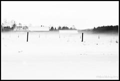 Fog (mmoborg) Tags: winter bw snow cold fog kyla blackwhite vinter sweden sverige snö 2012 dimma svartvitt mmoborg mariamoborg