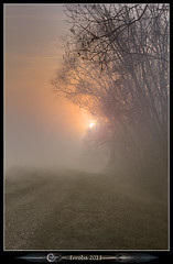 Sun peeping through the mist (Erroba) Tags: trees mist fog sunrise canon belgium belgique belgi erlend muizen 24105mm 60d erroba robaye