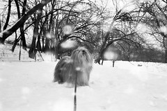 snow (Charley Lhasa) Tags: city nyc newyorkcity urban dog snow ny newyork film 35mm path centralpark manhattan snowstorm scan trail snowfall charley cherrytrees volvox lhasaapso nikonos lti 28mmf28 nikonosv grayscaleconversion charleylhasa tumblr revolog software:adobe=lightroom file:original=jpeg lwnikkor2828 lwnikkor28mmf28 lw28 lens:nikkor=lw2828 digitalminilab camera:nikon=nikonosv xmscd12 roll:number=v0004 folder:name=6475 image:number=647504 date:uploaded=120126175447 revologvolvox200 set:name=lti325409 lti:scan=325409 set:name=v0004 xmscd12v revodog revodogs
