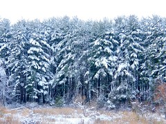 Winter Woods (Stanley Zimny (Thank You for 19 Million views)) Tags: park winter white snow cold tree ice nature forest woods seasons snowy freezing fourseasons harriman snowfall 4seasons