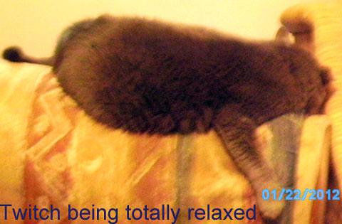 Feb2012_Cats.jpg