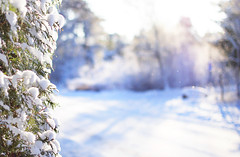 Grna grenar och bla skuggor (Lisa Widerberg) Tags: road trees winter sun white snow cold backlight woods forrest sweden bokeh freezing lensflare softfocus 2012