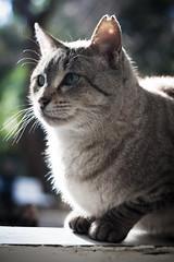 V (Stefano/6884) Tags: cats valencia cat canon meow gatto gatti jardinbotanico catportrait 400d canoneos400d gatosdeljardnbotnicodelauniversidaddevalencia