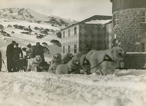 A dog team at 'The Chalet', Kosciuszko (NSW)