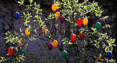 Happy Easter ! (AnyMotion) Tags: plants primavera nature colors easter spring bush colours natur decoration eggs colourful ostern printemps bunt busch farben frhling 2014 eier gladpsk froheostern anymotion felizpscoa joyeusespques buonapasqua canoneos5dmarkii 5d2 wesolegoalleluja vrolijkepasen felicespascuas osterrschmuck