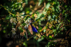 Taiwan-121113-249 (Kelly Cheng) Tags: travel color colour green tourism nature animals horizontal fauna butterfly daylight colorful asia day taiwan vivid nobody nopeople colourful traveldestinations  northeastasia
