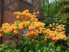Maison Chateaubriand (Chtenay-Malabri, Hauts-de-Seine, France) (frecari) Tags: flowers france fleurs garden french jardin iledefrance parc chateaubriand hautsdeseine