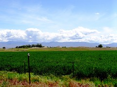 Spring scene (EcoSnake) Tags: spring highway may idaho farms crops agriculture meridian kuna