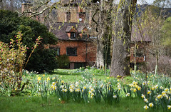 Ramster Gardens - Surrey (Mark Wordy) Tags: surrey daffodils springflowers narcissus ramstergardens chiddingford ramsterhall