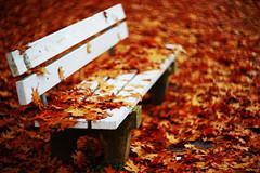 Autmn Leafs_2 (kubilayturan) Tags: autmn leafs germany bamberg hain park sony a7ii helios40 85mm f15 swirl bokeh brown red colours love