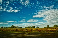 Vineyards and Blue Skies (Eustaquio Santimano) Tags: blue beautiful skies wine australia vineyards valley aurora nsw hunter hdr recommended pokolbin