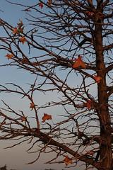 il freddo si avvicina ! (givi60) Tags: foglie alberi autunno