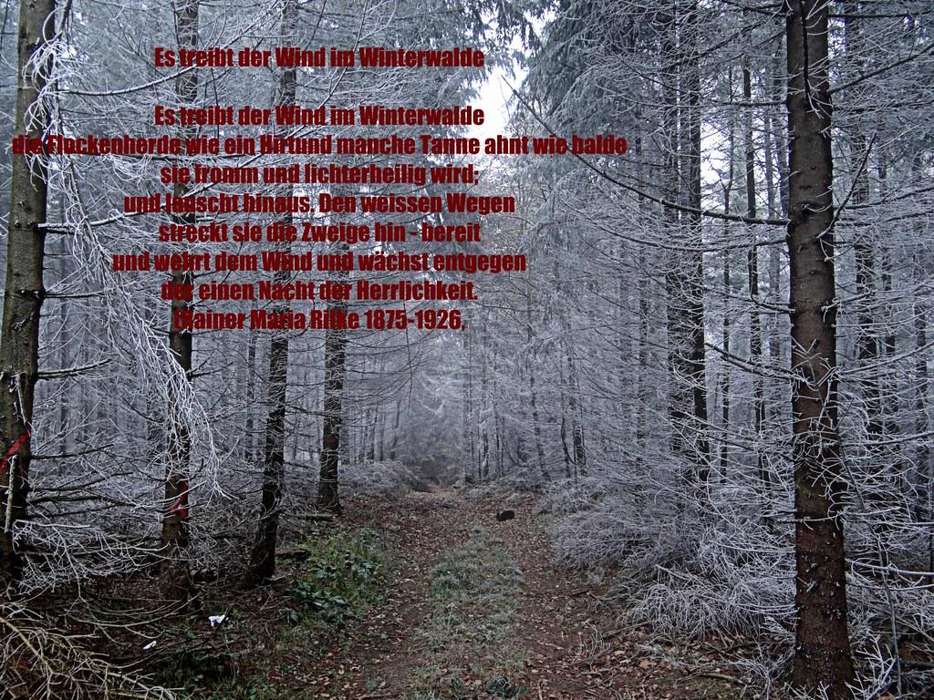 Gedicht rilke es treibt der wind