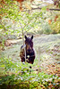 There was something in the air (  Les Hirondelles  ) Tags: wood autumn trees light horse orange sun mountains tree green fall nature field leaves animal yellow rural canon fence golden leaf wire bush woods holidays shiny branch quiet colours dof shine friendship bright bokeh branches air atmosphere sunny shy 50mm14 domestic fairy stare change lovely pastoral bushes coloured brightness autumnal enchanted muzzle freshness gentle bucolic sunnyday autumnalleaves tranquilscene enchanting gentleness fairywood atthemountains horsemuzzle autumnalmood leshirondellesphotography horsestaringme meetingalongthewoods therewassomethingintheair