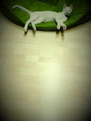 ก่อนนอนคืนนี้ ขอปิดท้ายด้วยภาพแมวนอน (´▽`)