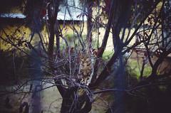 the wild II (thisisforlovers) Tags: wild tree cat photography chat bokeh gato desenfoque árbol tele ramas salvaje nikond7000 andreadorantes