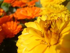 Todos estn cambiando (0_Detalles_0) Tags: flores colores changing keane ptalos delicados suaves energticos radiantes everybodys anmicos