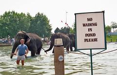 No Wading In Pond Please (~EvidencE~) Tags: toronto film kodak 80s harbourfront watersedge elephants evidence nowading heyssuthinkofthat