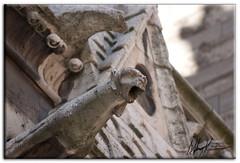 "Notre Dame Gargoyle • <a style=""font-size:0.8em;"" href=""https://www.flickr.com/photos/34058517@N02/6503257529/"" target=""_blank"">View on Flickr</a>"