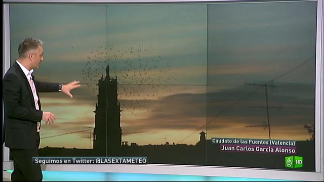 Últimas bandadas de pájaros agrupándose, fin del Otoño