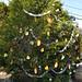 360_Trees_2011_049