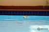 Razante (bodimes) Tags: piscina passaro banho pitangus sulphuratus bentivi