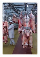 098 (bruxelles5) Tags: flowers food paris france fruits fleurs market meat marche legumes rungis viandes grossiste