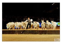 Jumping Mechelen L-18.jpg (Esdanitoff) Tags: horse animal cheval jumping belgium belgique belgie brabant mechelen saut paard paarden nekker malines maline attelage nekkerhal nekkerhallen