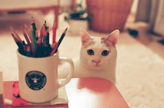 my shiro (prologuer) Tags: home cat films nikonfm2 shiro