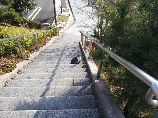 Today's Cat@2012-01-01
