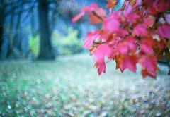. (patrickjoust) Tags: park trees usa color fall film leaves analog america forest 35mm 50mm us md woods nikon focu
