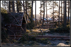 After the storm Dagmar (mmoborg) Tags: trees storm sweden sverige träd dagmar 2011 mmoborg mariamoborg rotvältor