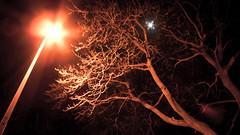5  365+1 (Mozuk) Tags: longexposure tree wand spell olney 3651 5366 lx3 lightroom3 projectleapyear wizardswand harrypotterswand mozuk photosofolney mauriziocherbava