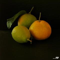Citrus (Osvaldo_Zoom) Tags: family italy stilllife fruits yellow nikon citrus oranges clementine calabria arancia mapo clementina agrumi d80
