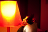Day Sixty two (Polarizing) Tags: light shadow red cat licking porject365 mariliapedroso