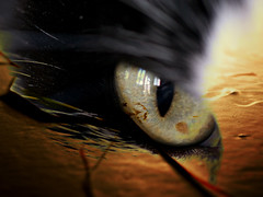 Galaxie du Chat (JMVerco) Tags: art photomanipulation digitalart creative sharing création creazione vividimagination artdigital awardtree exoticimage jmlinder
