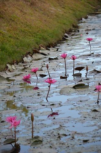 Water lilies ©  Still ePsiLoN