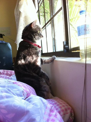 Catman - at my sisters bedroom window checkin out the action out front. There is a fly screen there, which is all smooshed because at night he pops up on the other side and MEOOOOWS to be let in....and then fed.