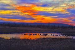 Duck Dinette (Kansas Poetry (Patrick)) Tags: lawrencekansas bakerwetlands wakarusawetlands patrickemerson quakingpatricklovesquakingnancy