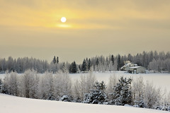 Winter in the countryside (Barry_Madden) Tags: trees winter snow home suomi finland countryside talvi koti