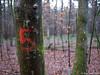 Nr.5 lebt ! 20.01.2012