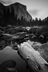 Yosemite Valley View Turnout (Xiphoid8) Tags: reflection water blackwhite log rocks yosemite yosemitenationalpark elcapitan valleyview mercedriver yosemiteca yosemitecalifornia blackwhitephotos yosemitewinter elcapitanyosemite valleyviewyosemite icylog valleyviewpulloff valleyviewturnoff yosemitejanuary valleyviewturnout