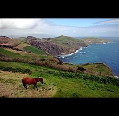 The horse (joeri-c) Tags: horse portugal landscape nikon gimp nikkor azores saomiguel acores digikam 1685 d5000 1685mm nikkor1685mm miradourodesantairia saariysqualitypictures nikond5000