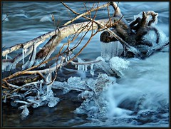 AtTheCreek (BphotoR) Tags: blue winter light sun ice water closeup creek germany flow deutschland licht wasser hessen bach february icy eis sonne februar odenwald balu naturesfinest zweig eisig vereist sdhessen supershot anawesomeshot weschnitz weschnitztal bphotor